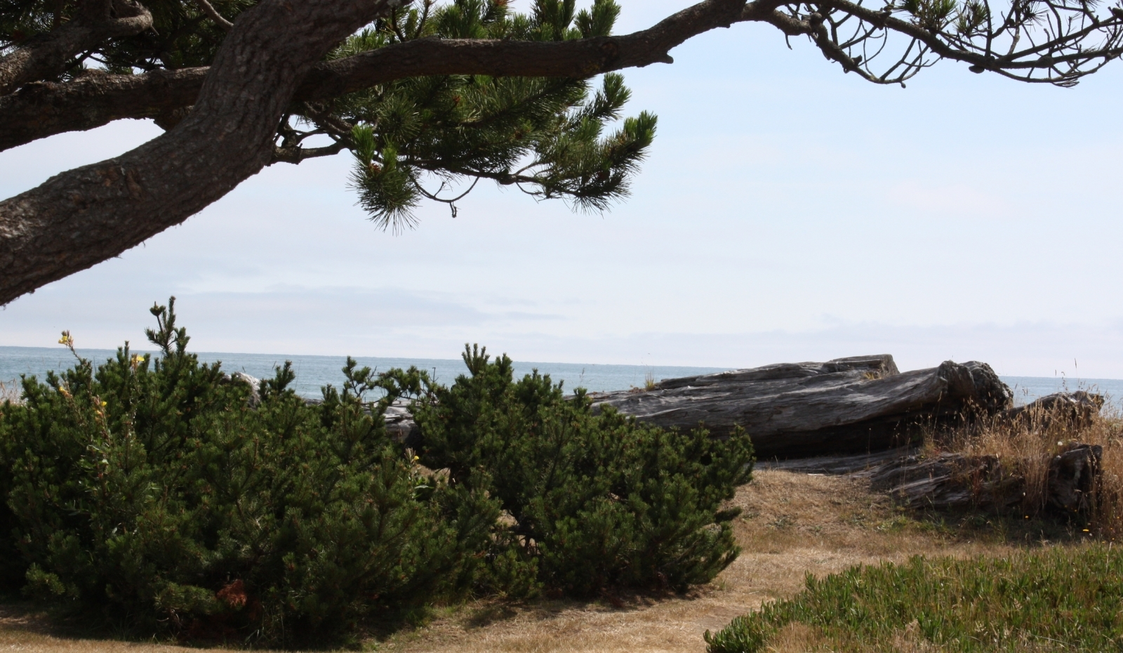 trees and shrubs on grassy hill overlooking ocean