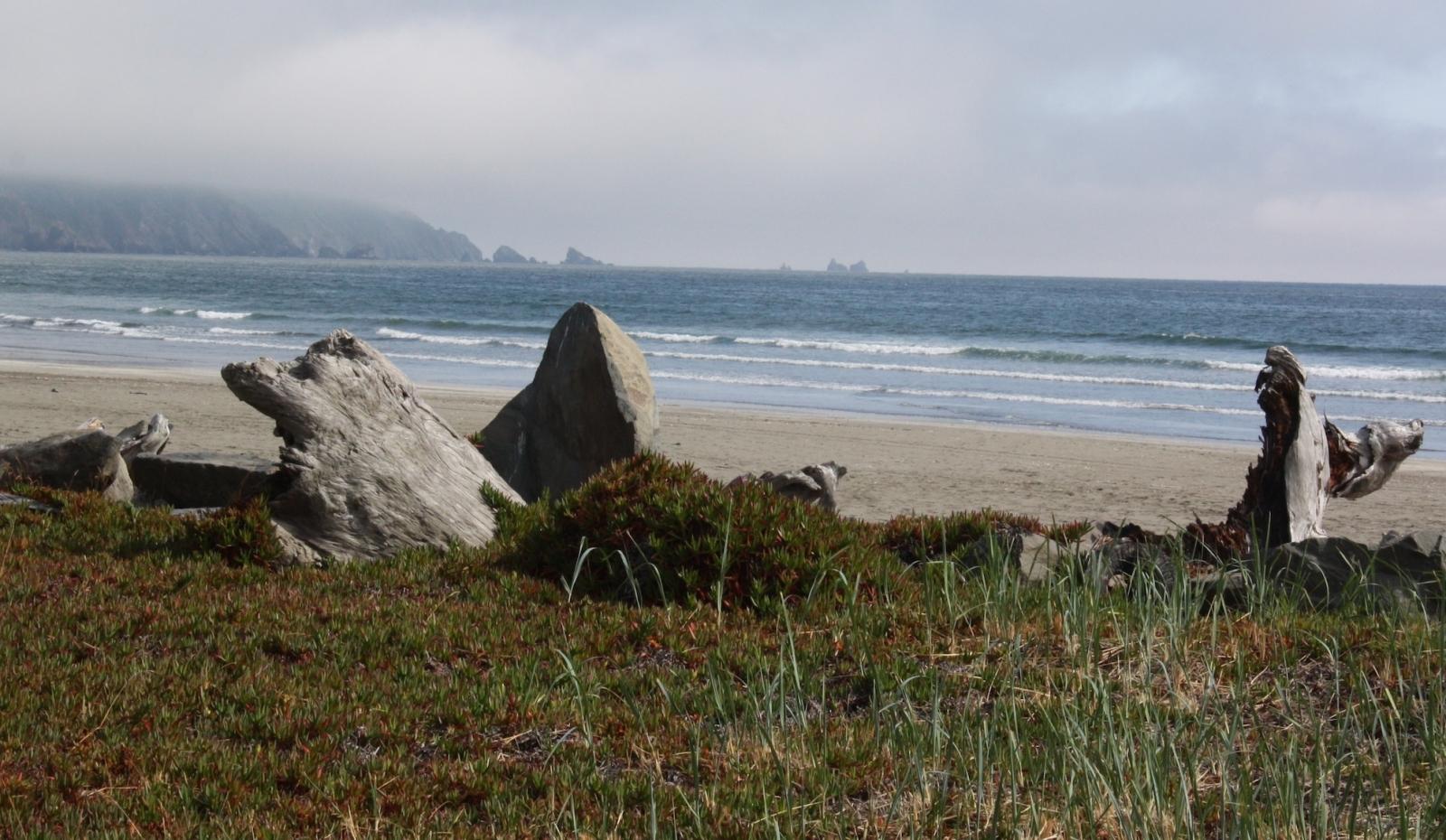 driftwood on grass next to misty ocean